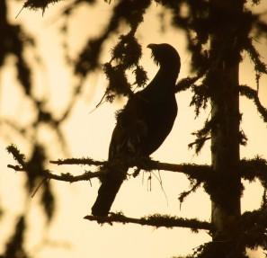 Zachránime 40 000 hektárov lesa?