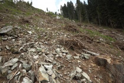Výzva slovenskej vláde: Zastavte ničenie horských lesov!