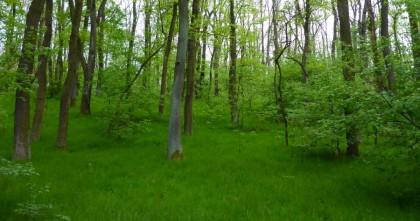 Podnet na prešetrenie vedomého porušovania resp. obchádzania zákona č. 543/2002 Z. z. o ochrane prírody a krajiny