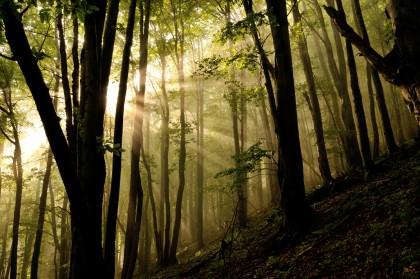 50 000 podpisov za 5 % divočiny