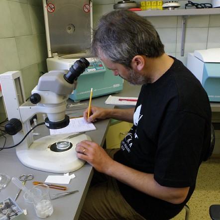 RNDr. Andrej Mock, PhD.